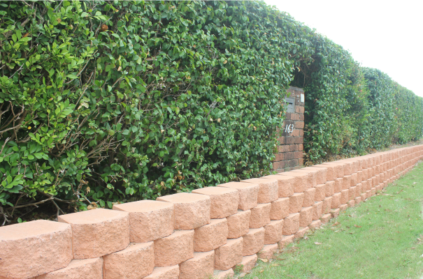 Long_drystack_Canyon_retaining_wall_supporting_a_high_garden_bed_with_hedges