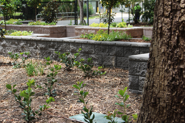 Botanical_Gardens_with_vertical_faced_retaining_wall_garden_beds